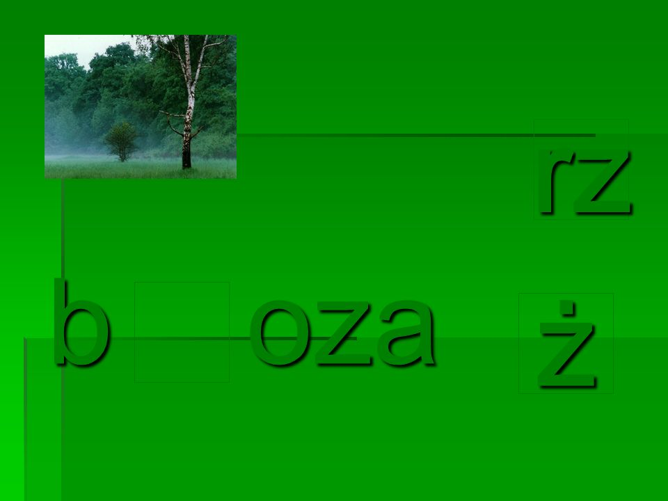rz b oza ż