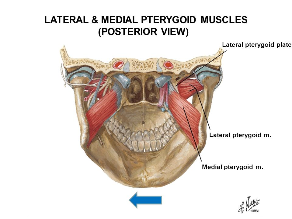 INFRATEMPORAL FOSSAE; TMJ - ppt download