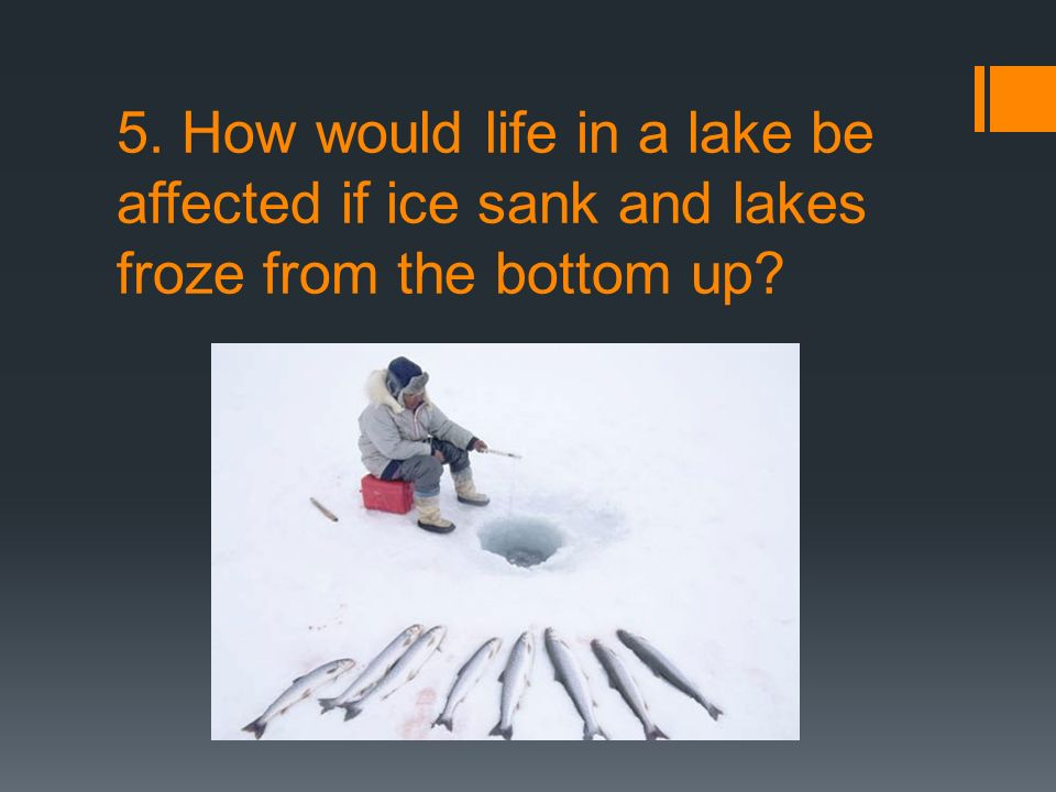 5. How would life in a lake be affected if ice sank and lakes froze from the bottom up
