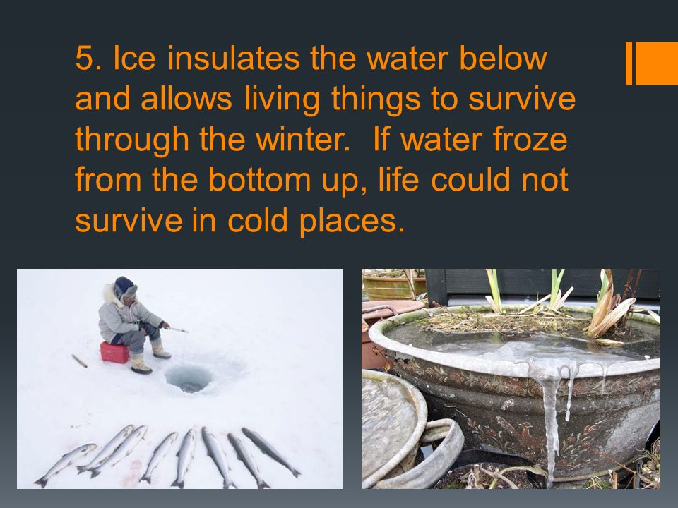 5. Ice insulates the water below and allows living things to survive through the winter.