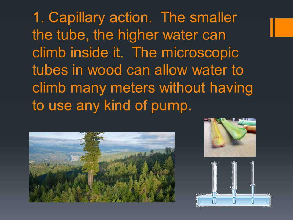 1. Capillary action. The smaller the tube, the higher water can climb inside it.