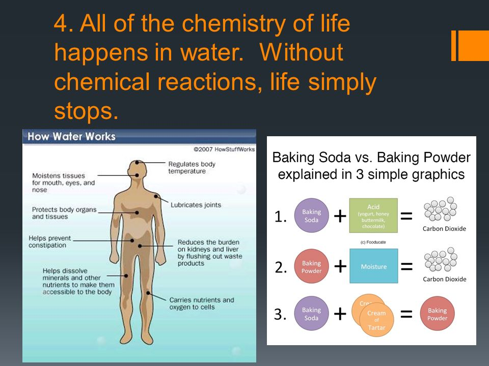 4. All of the chemistry of life happens in water