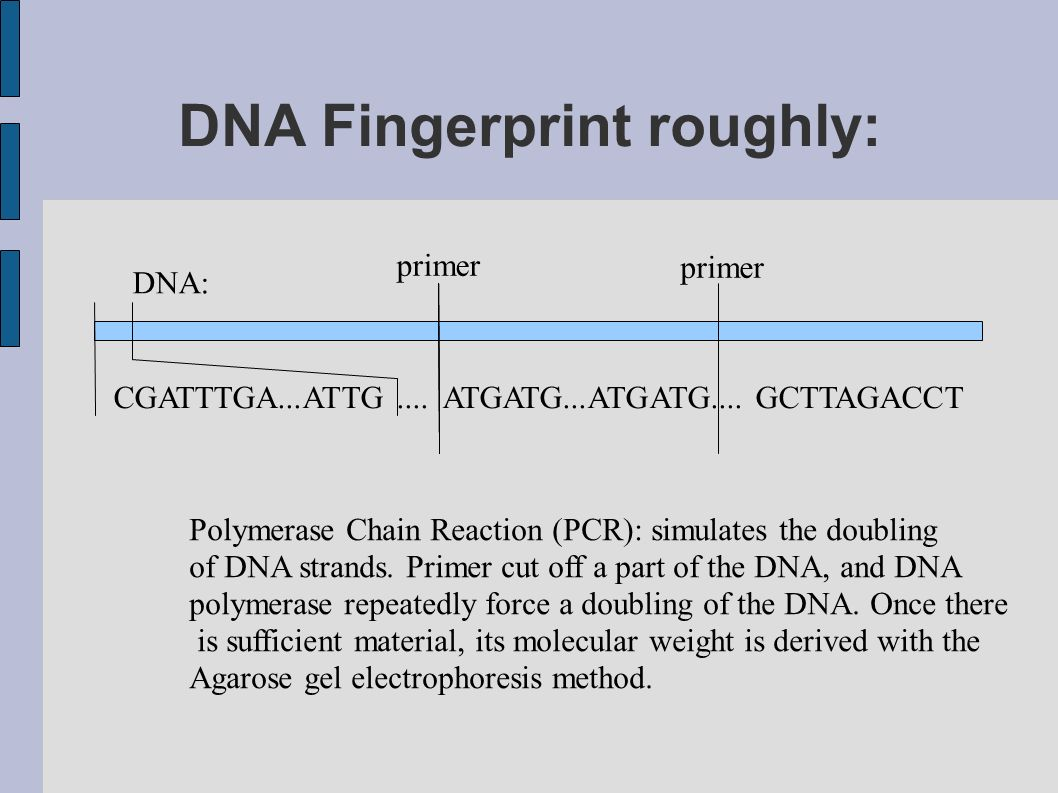 DNA Fingerprint roughly: