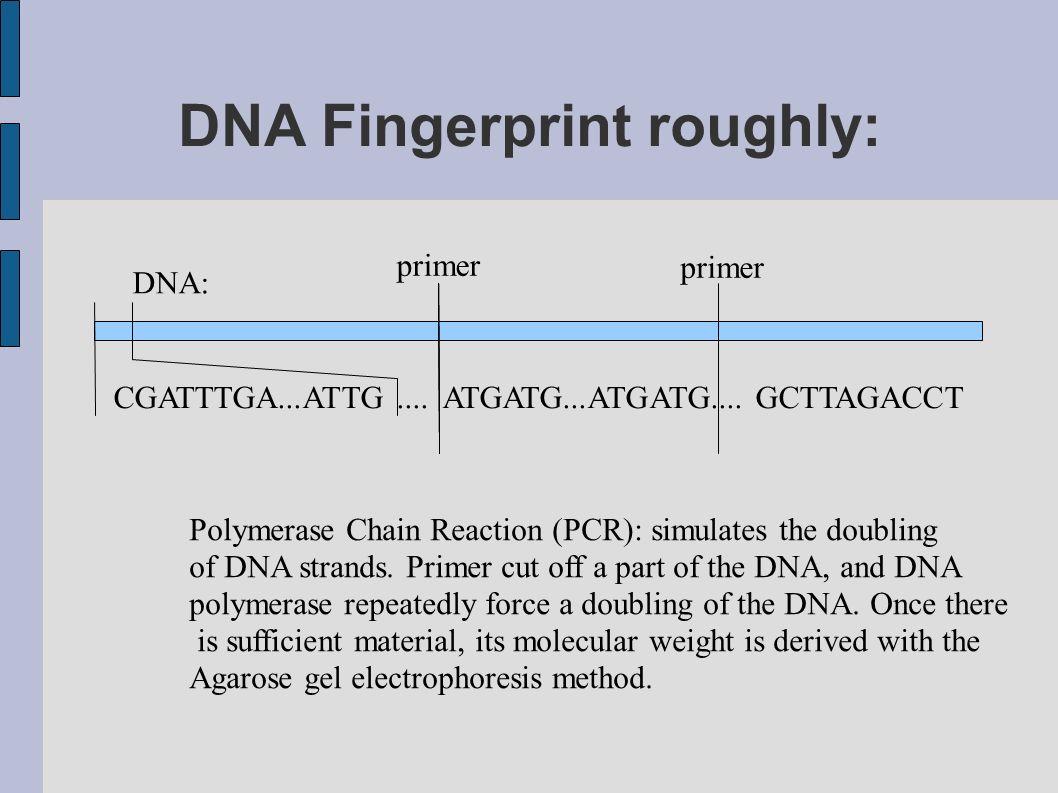 DNA Fingerprint roughly: