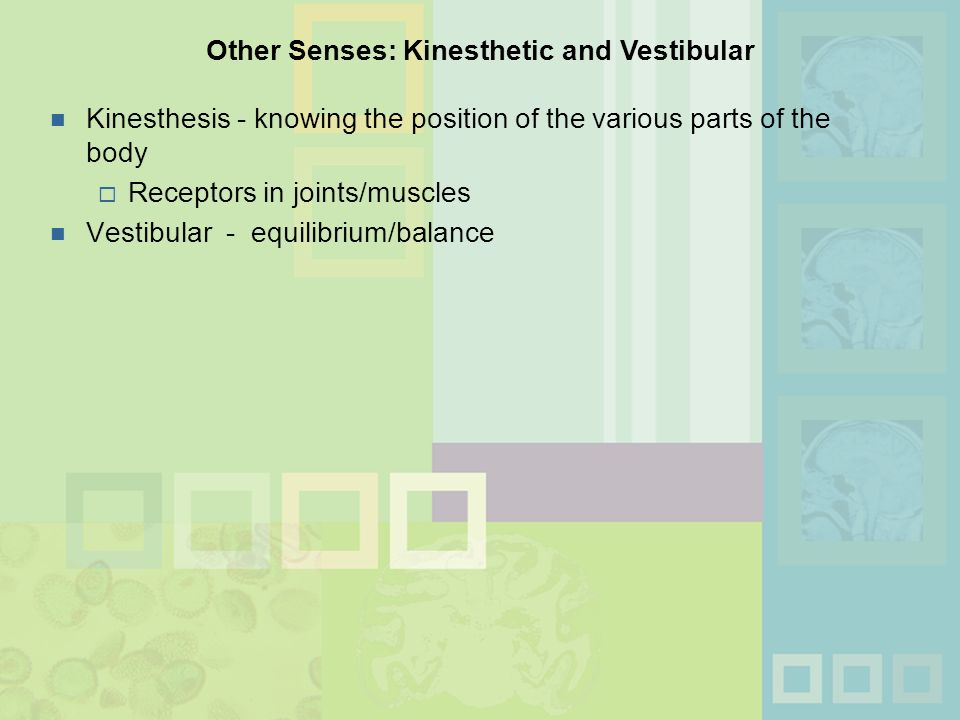 What is the difference between kinesthesis and vestibular sense?