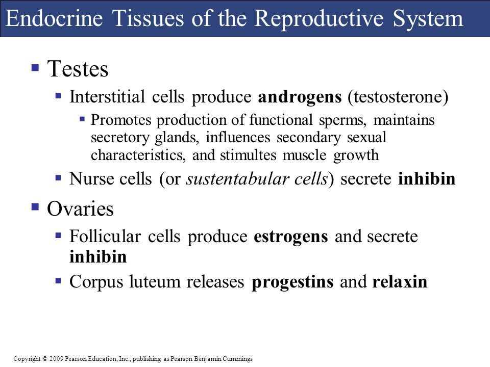 endocrine and reproductive system The human endocrine system – explore the anatomy of endocrine glands and   cellular metabolism, reproduction, sexual development, sugar and mineral.