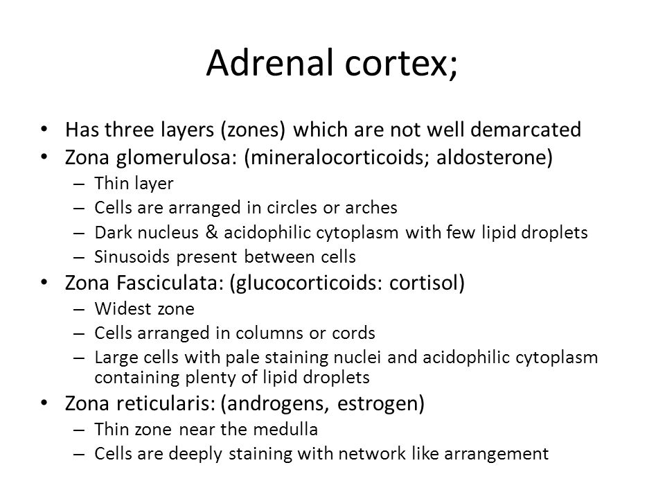 Adrenal cortex; Has three layers (zones) which are not well demarcated