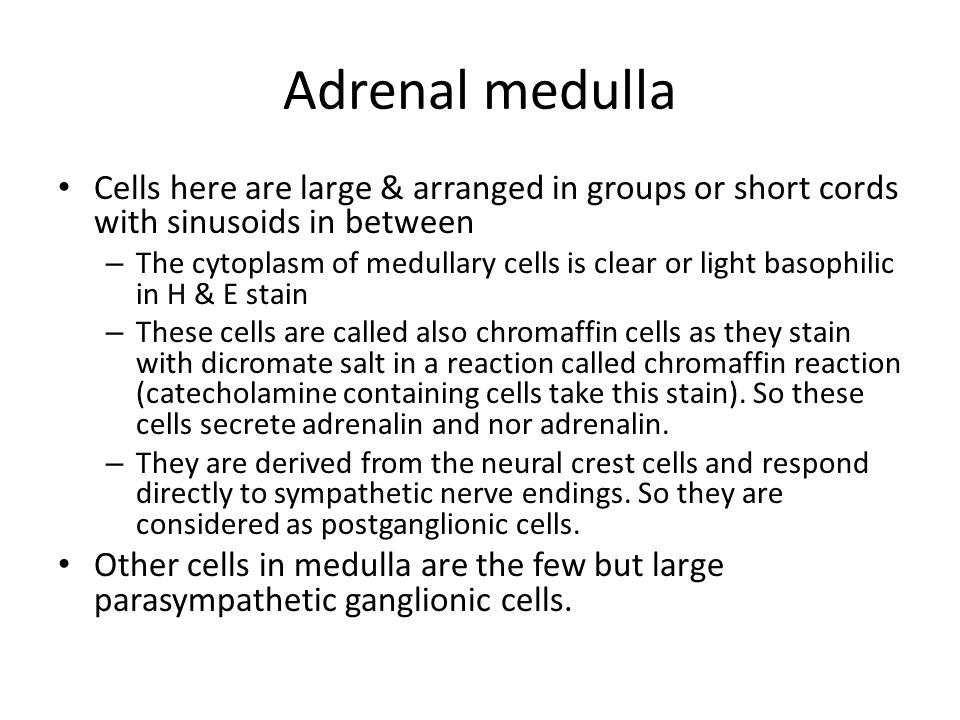 Adrenal medulla Cells here are large & arranged in groups or short cords with sinusoids in between.