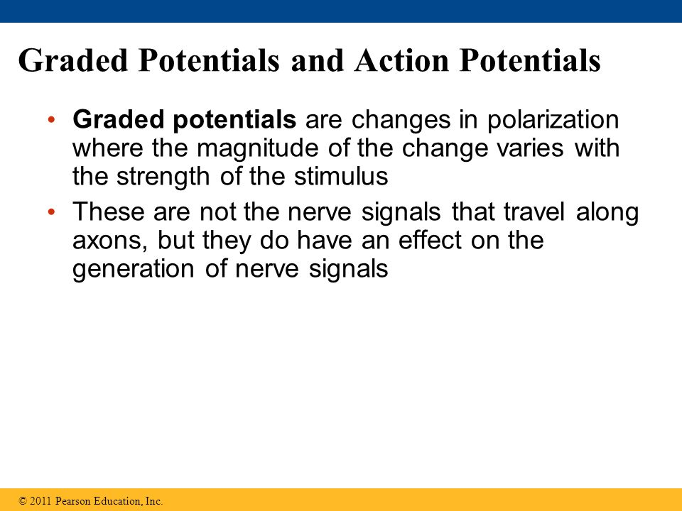 Graded Potentials and Action Potentials