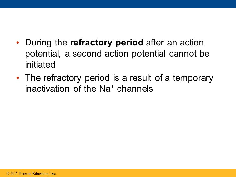 During the refractory period after an action potential, a second action potential cannot be initiated