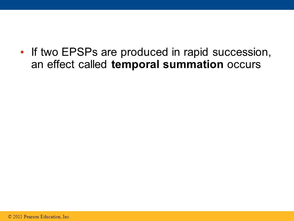 If two EPSPs are produced in rapid succession, an effect called temporal summation occurs