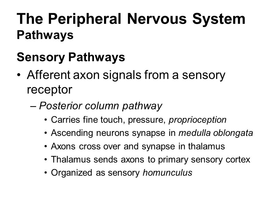 The Peripheral Nervous System Pathways