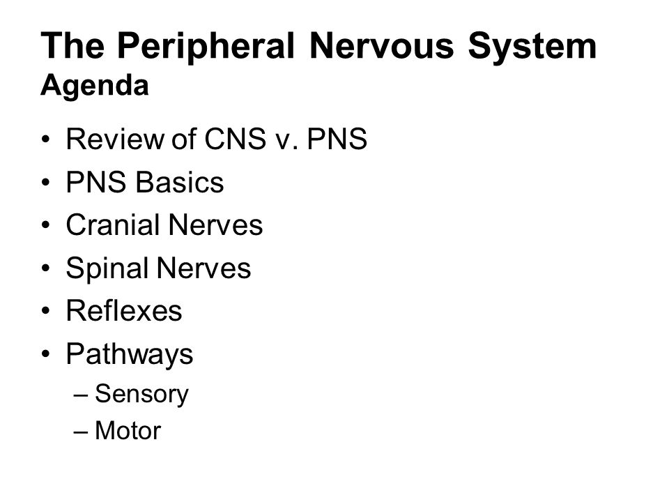 The Peripheral Nervous System Agenda