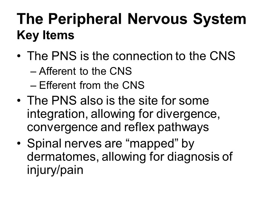 The Peripheral Nervous System Key Items