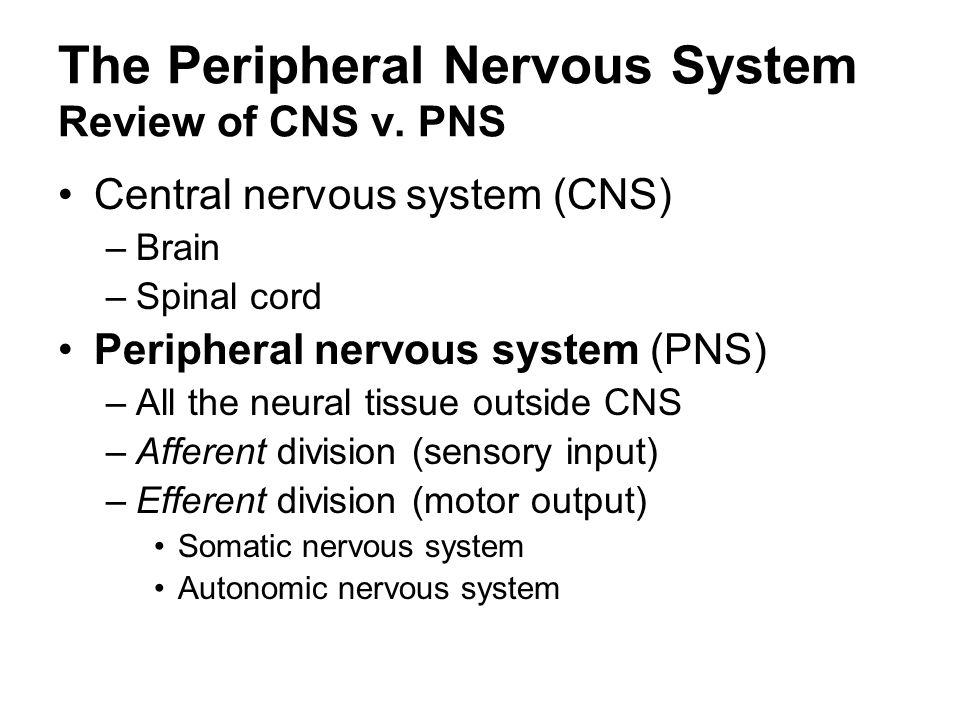 The Peripheral Nervous System Review of CNS v. PNS