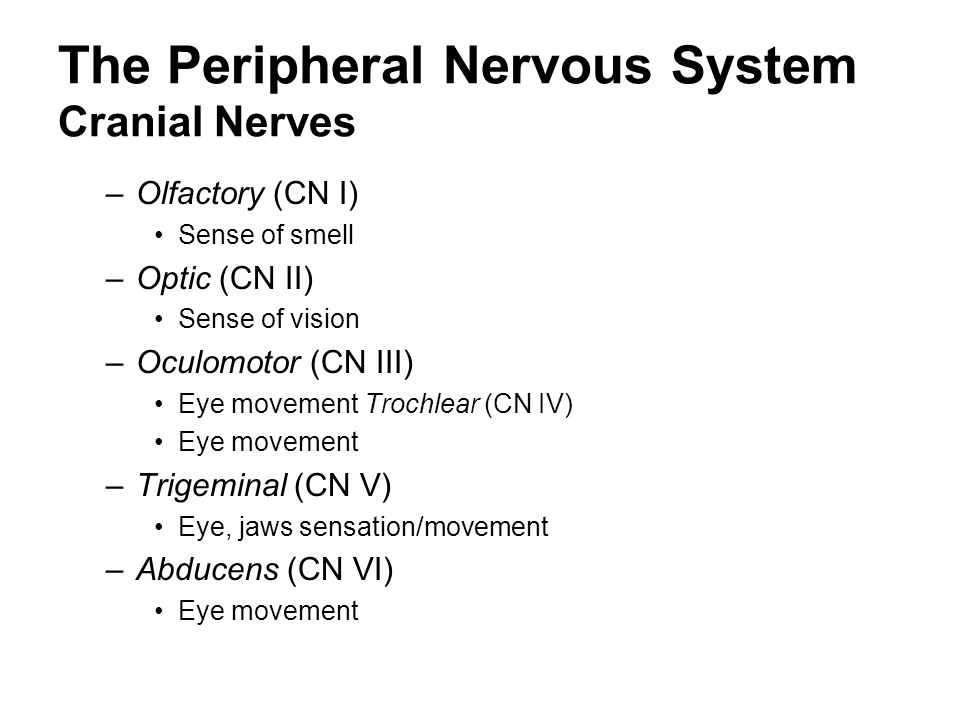 The Peripheral Nervous System Cranial Nerves
