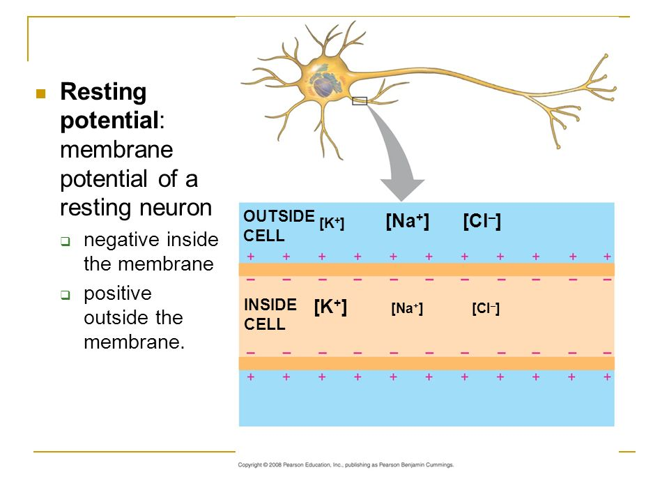 Overview of Neurons, Synapses & Nervous System - ppt video ...