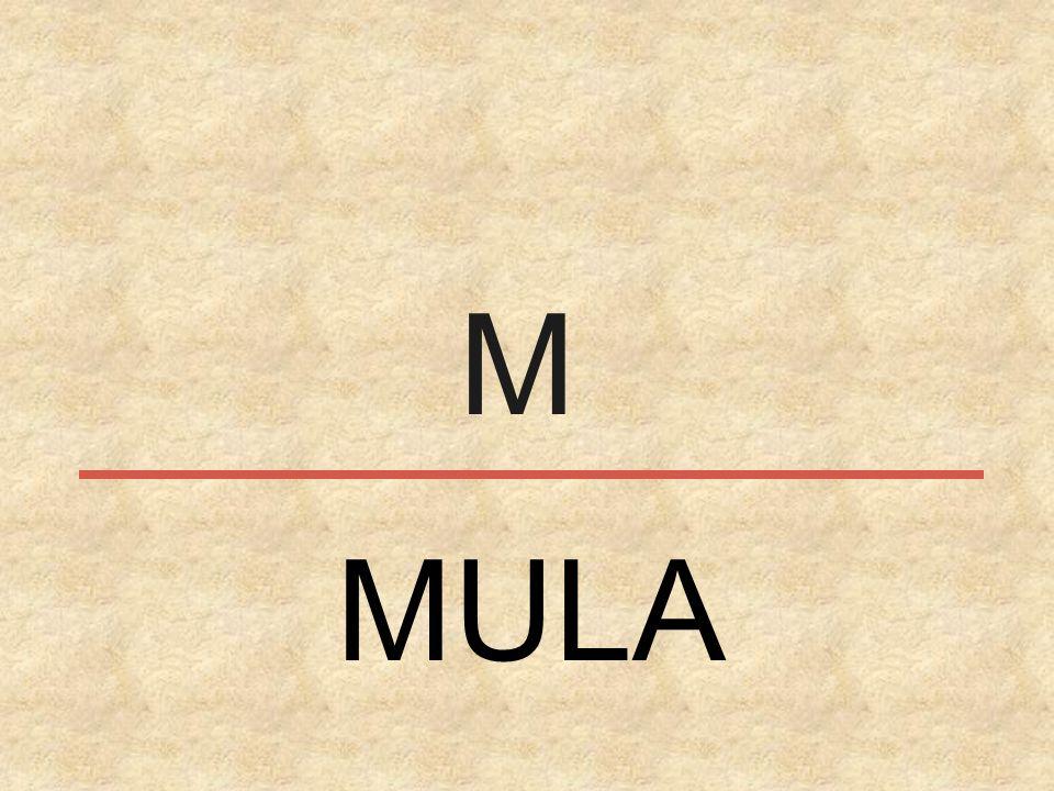 M MULA