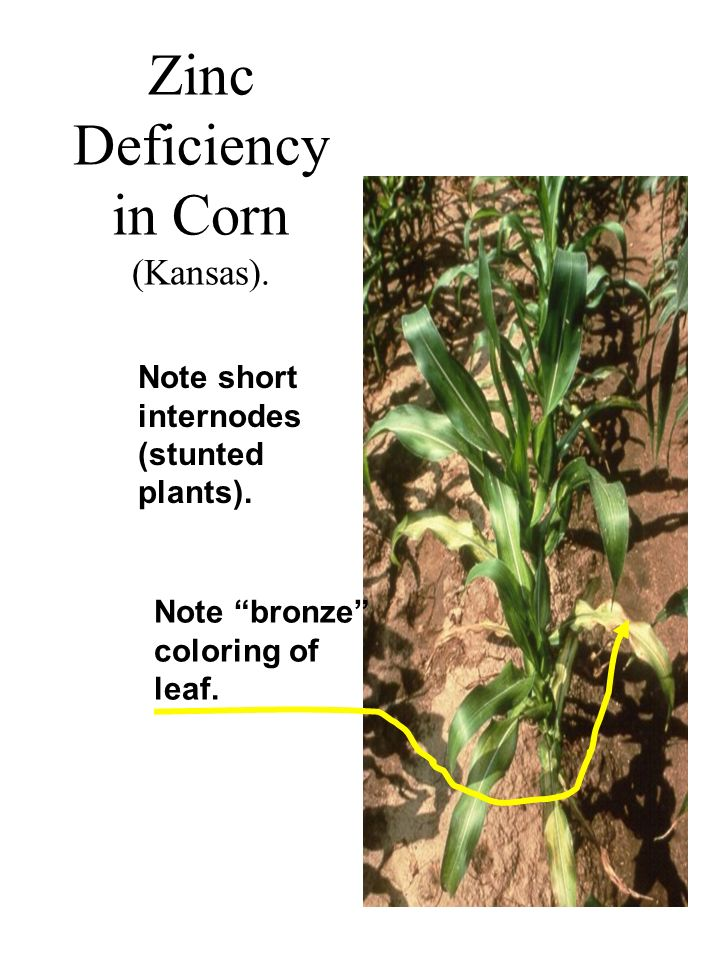 Essential elements soil ppt video online download for Soil zinc deficiency