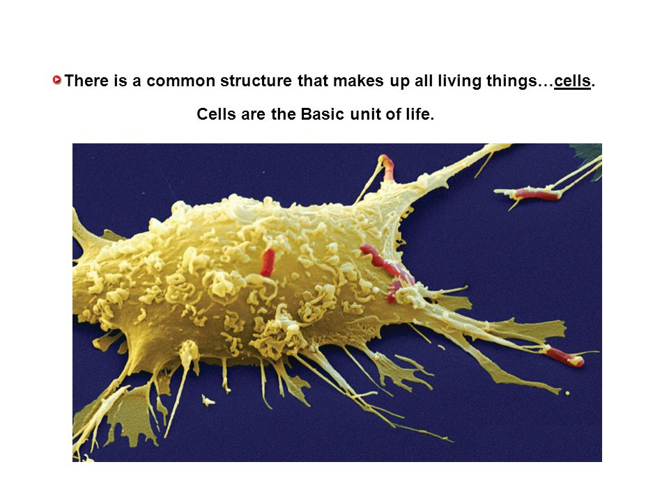 what makes up all living things Living organisms are made up of cells the first characteristic of a living thing is that, they are made up of cells a cell is the basic building block of all organisms.