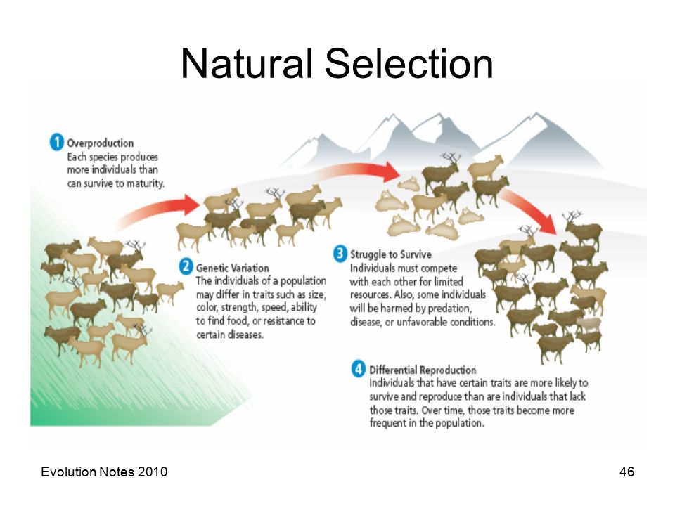 evolution notes Theory of evolution notes 1 theory of evolution natural selection 2 genetic variation is the driving force behindevolution there are many ideas of why.
