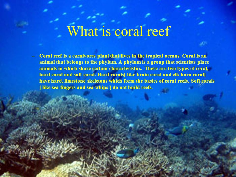 the characteristics of coral reefs the rainforests of the oceans Conservation of ocean environments, seas, coasts, the coral reefs and their  magnicient diversity of marine animals and plants.