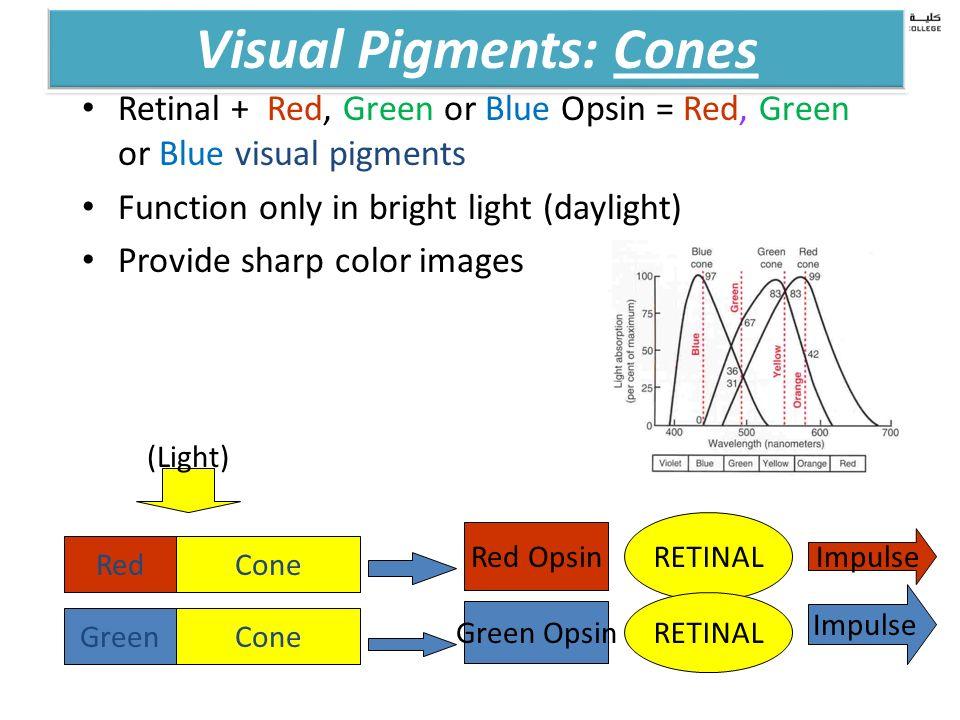 physiology of vision 2 ppt video online download. Black Bedroom Furniture Sets. Home Design Ideas