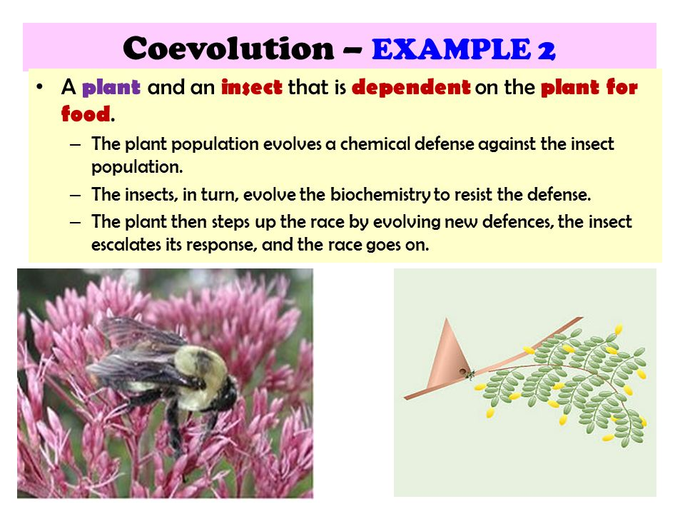 153 Mechanisms Of Evolution Ppt Video Online Download