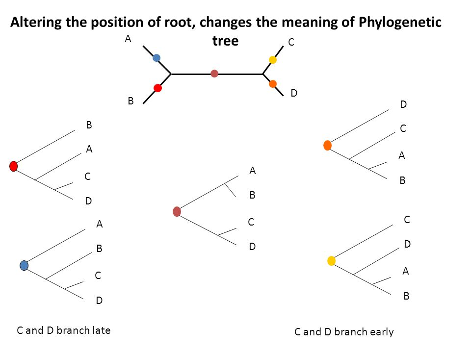 how to create phylogenetic tree online
