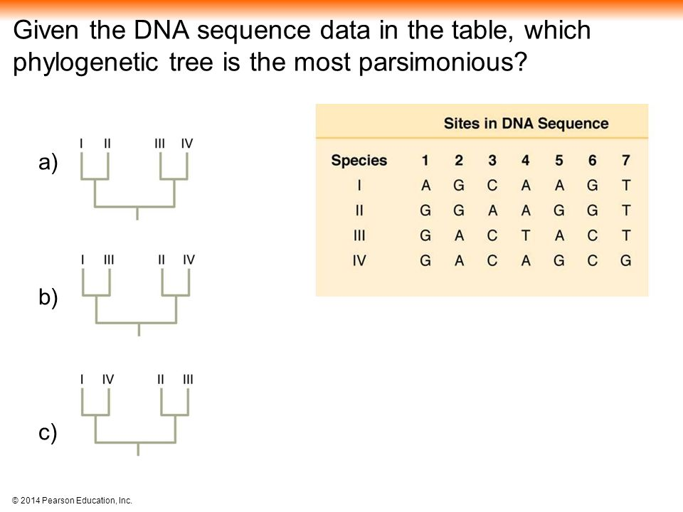 Given the DNA sequence data in the table, which phylogenetic tree is the most parsimonious
