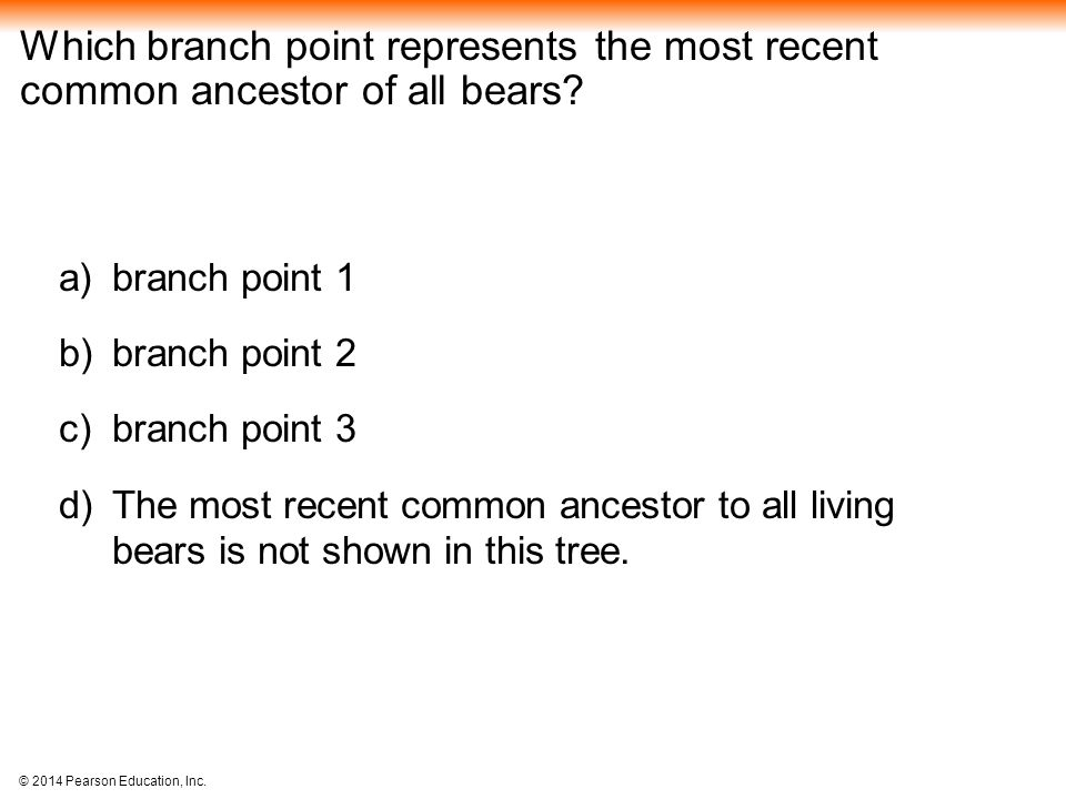 Which branch point represents the most recent common ancestor of all bears
