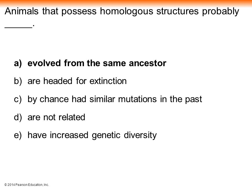 Animals that possess homologous structures probably _____.