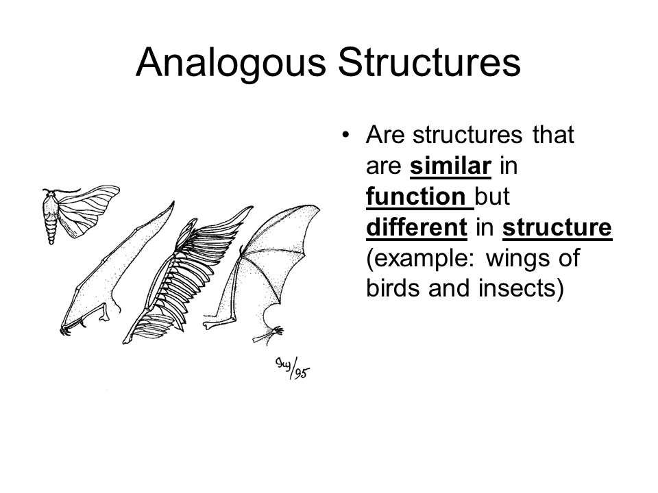 Analogous Structures Are structures that are similar in function but different in structure (example: wings of birds and insects)