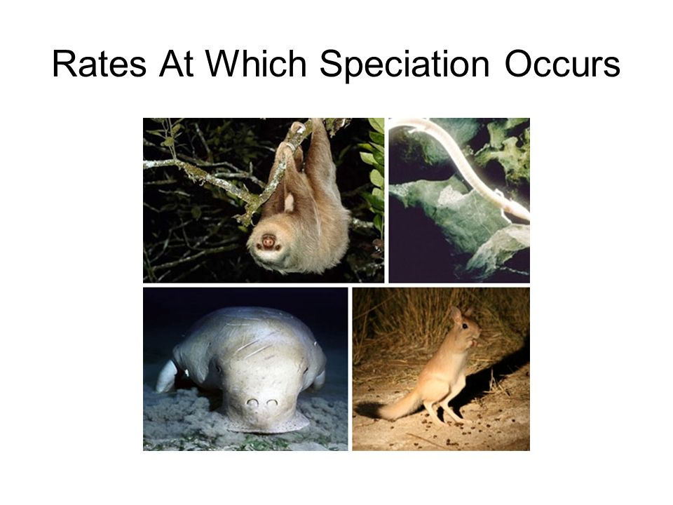 Rates At Which Speciation Occurs