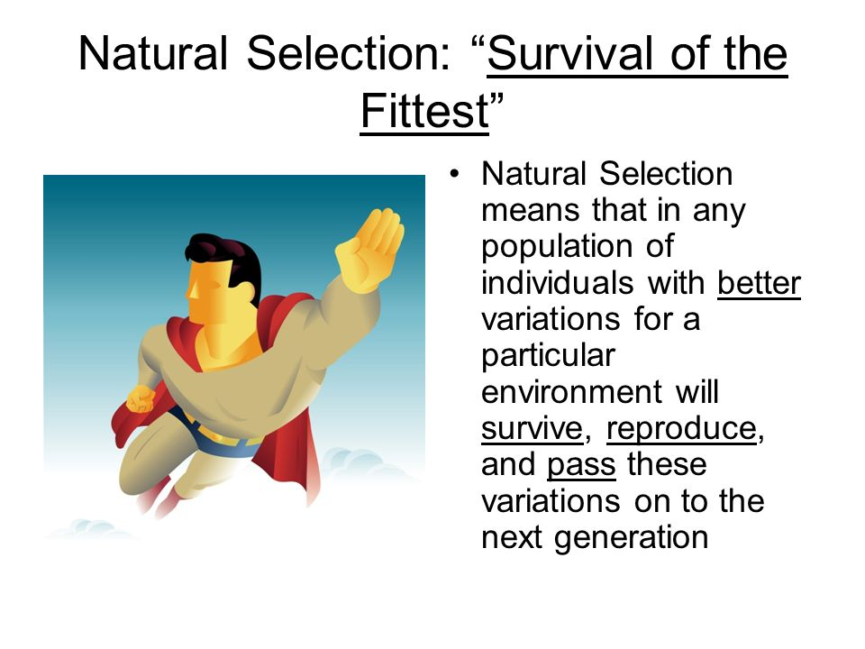 Natural Selection: Survival of the Fittest