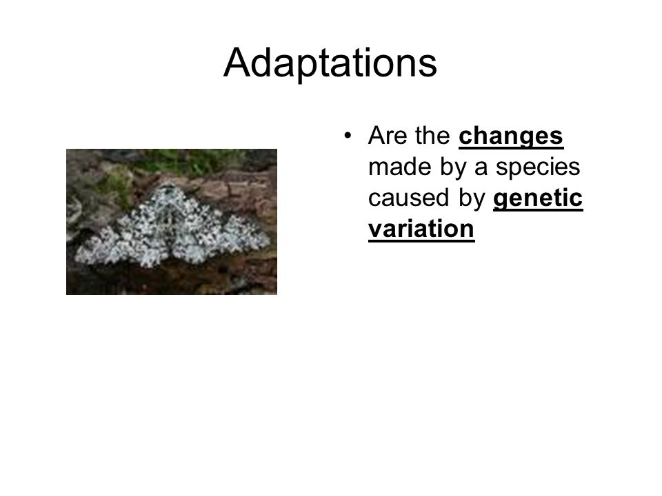 Adaptations Are the changes made by a species caused by genetic variation