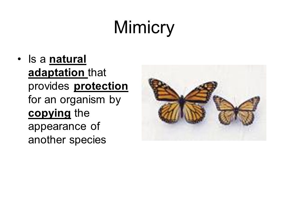 Mimicry Is a natural adaptation that provides protection for an organism by copying the appearance of another species.