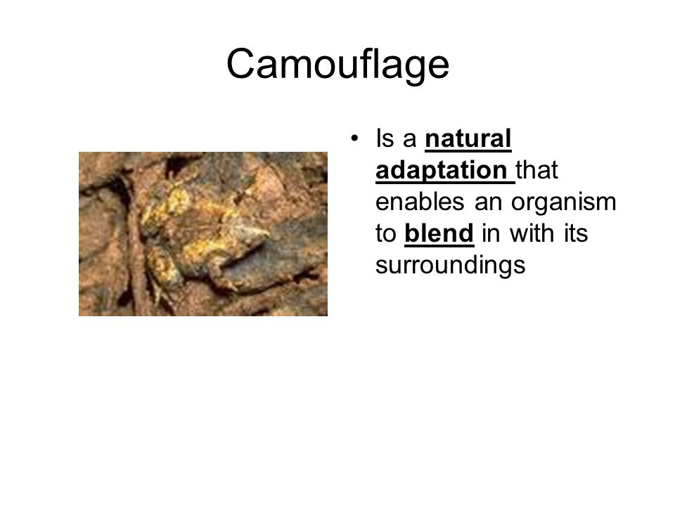 Camouflage Is a natural adaptation that enables an organism to blend in with its surroundings