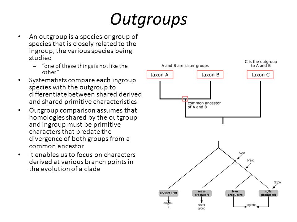 Outgroups An outgroup is a species or group of species that is closely related to the ingroup, the various species being studied.