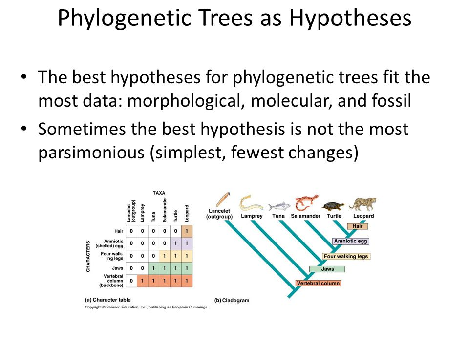 Phylogenetic Trees as Hypotheses