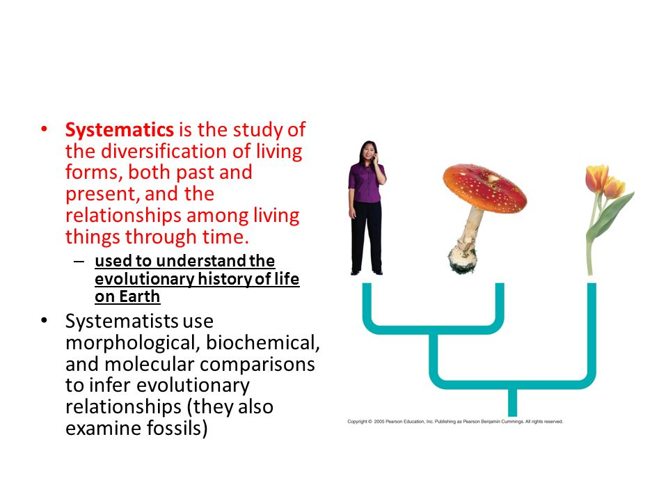 Systematics is the study of the diversification of living forms, both past and present, and the relationships among living things through time.