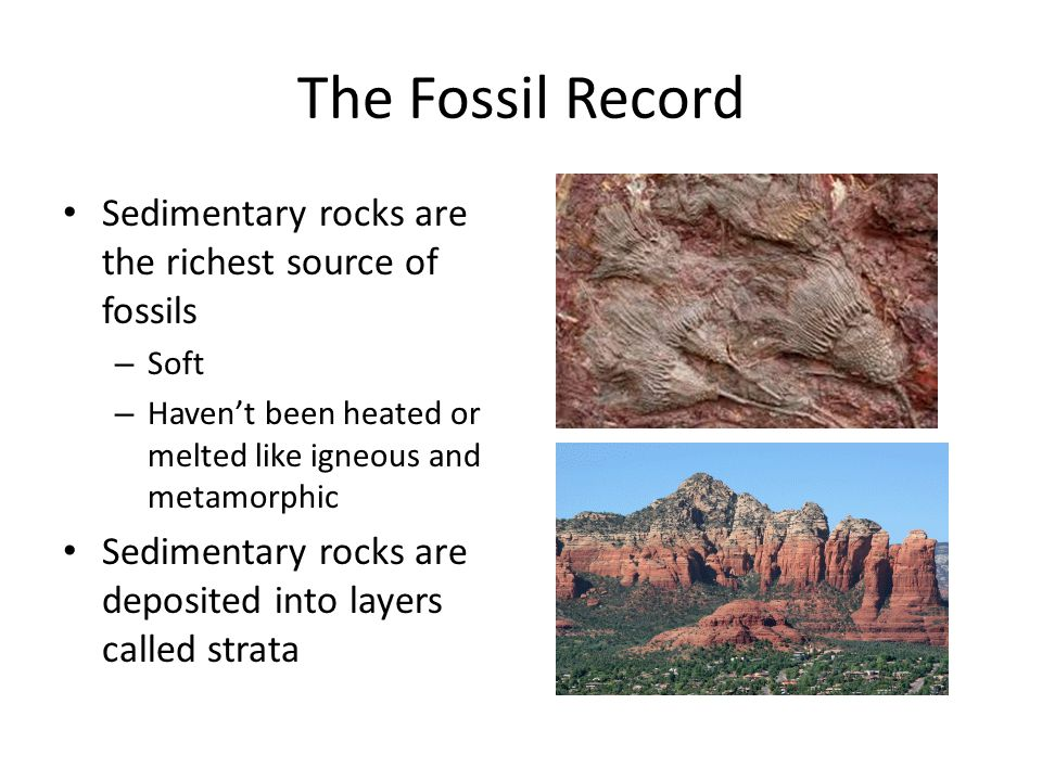 The Fossil Record Sedimentary rocks are the richest source of fossils