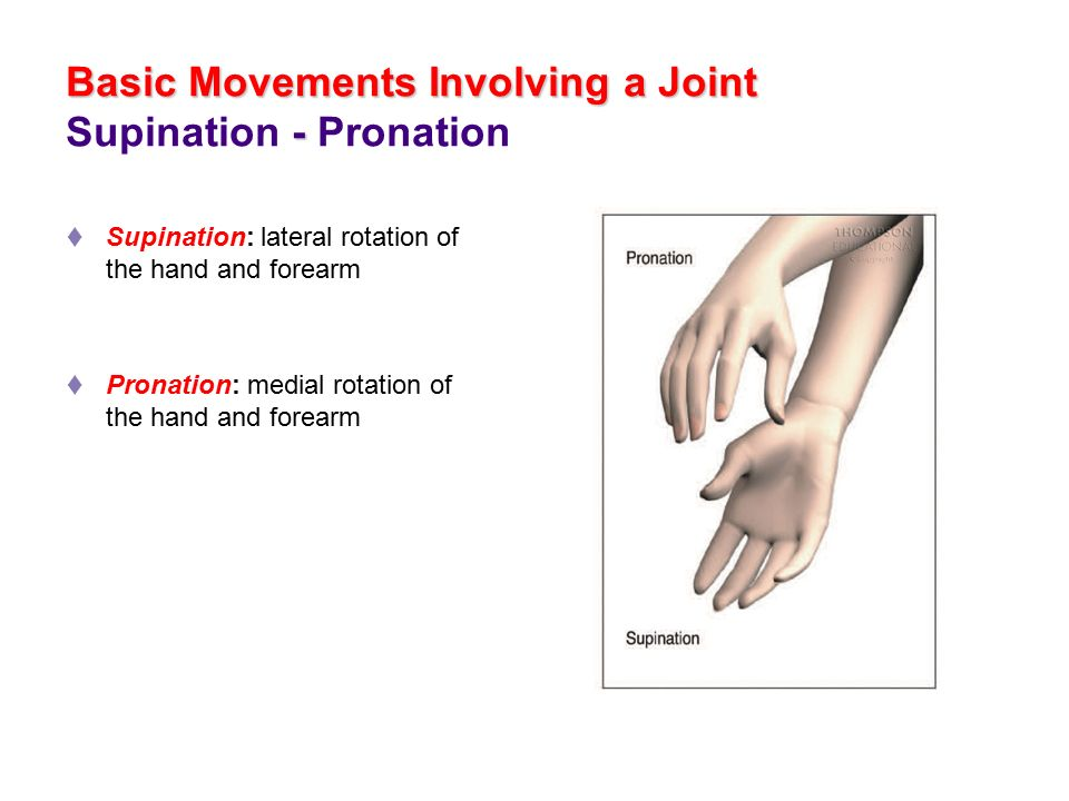 Exercise Science Section 1 The Anatomical Position Ppt Video