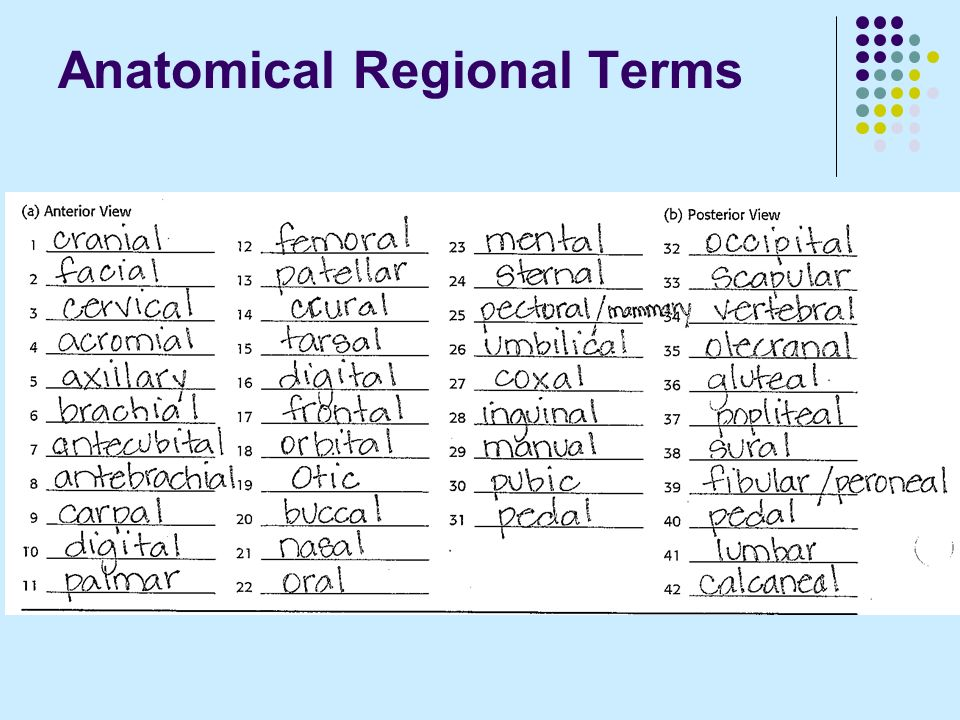 What is regional anatomy