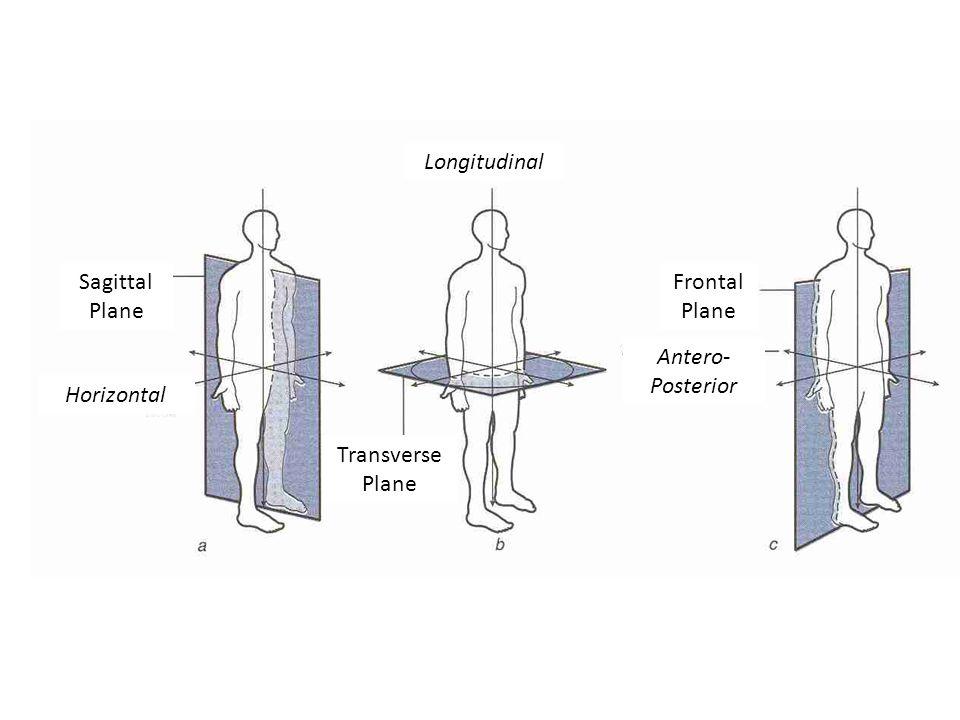 Longitudinal axis anatomy