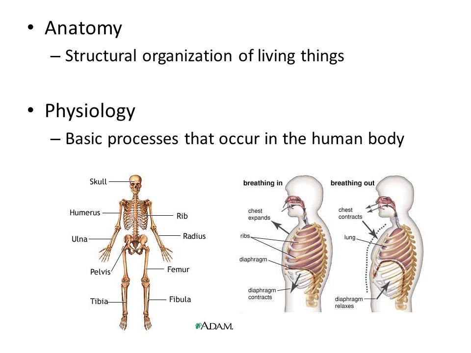 Ziemlich Introduction Of Anatomy And Physiology Fotos - Menschliche ...