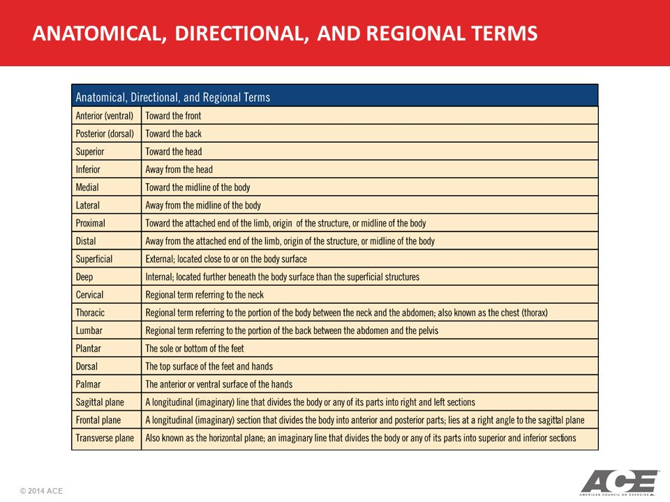 Directional And Regional Terms Examples