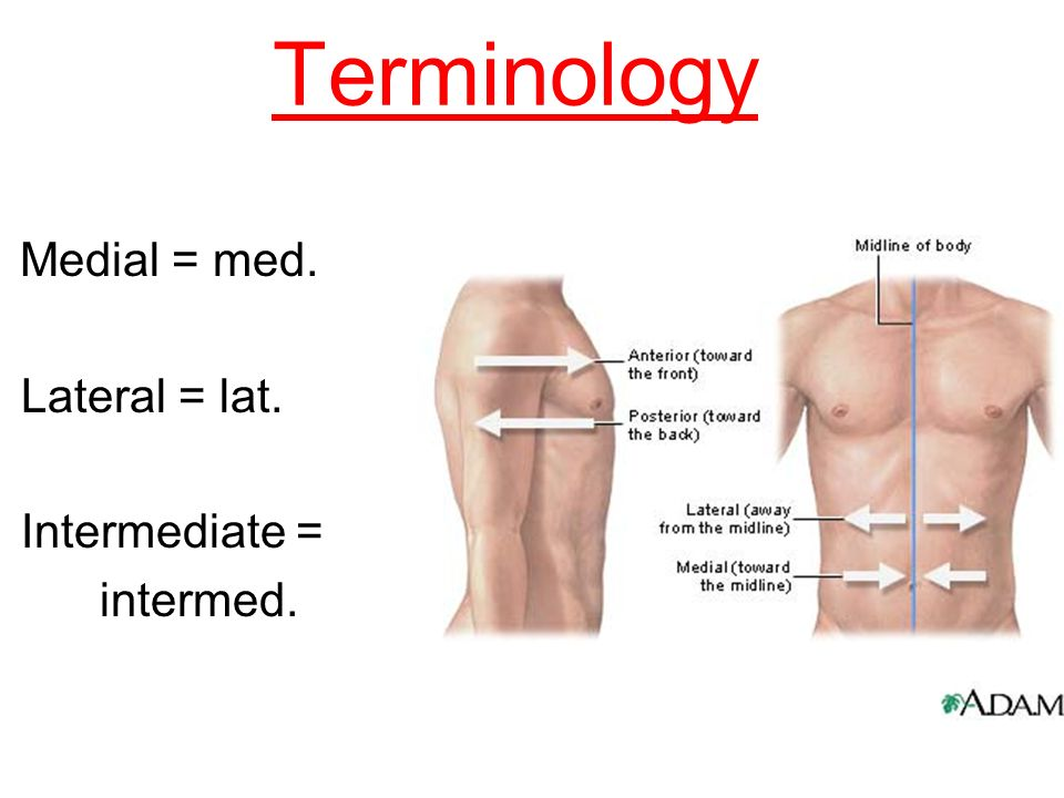 Definition of lateral in anatomy