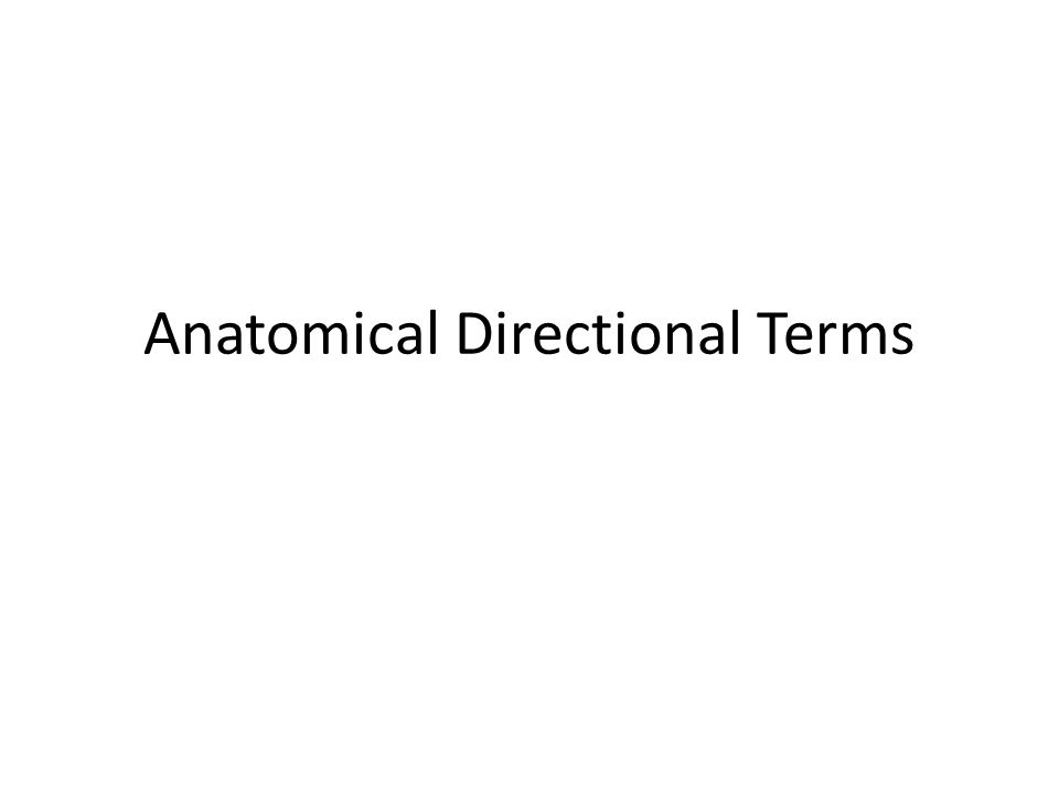 Anatomical Directional Terms Ppt Video Online Download