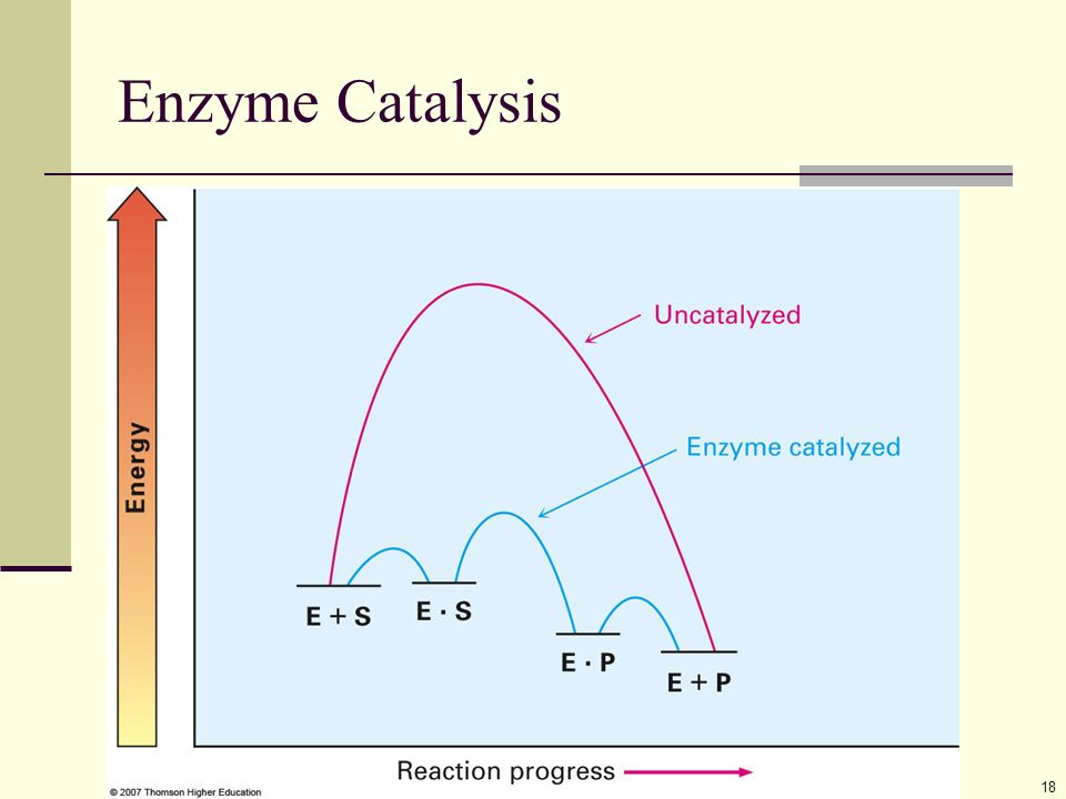 proteins  u2013 amides from amino acids